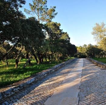 estrada pedra